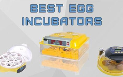 egg incubators