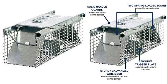 Top 5 Best Squirrel Traps In 2019 From 12 To 40