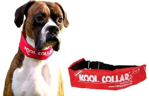 Kool Collar for dogs