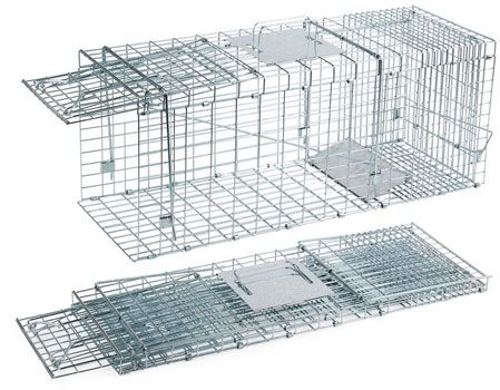 Live cage traps from squirrels: photo