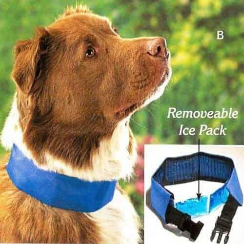 Cool Dog Collar