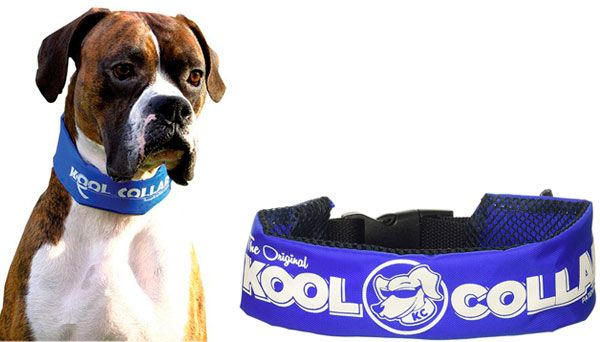 water-based cooling collar: photo