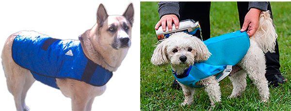 Dog cooling coats: photo