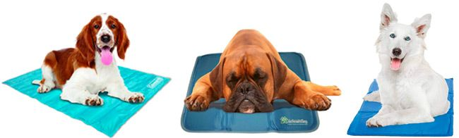 dog cooling pads: photo