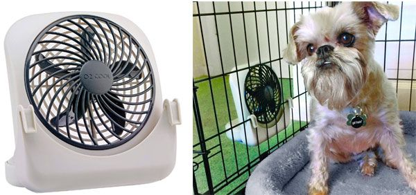 dog cooling fan from O2Cool: photo