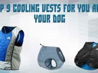 How to Pick a Proper Cooling Vest for a Worker, an Athlete, a Cyclist, a Biker, a Petite Lady and Your Dear Dog