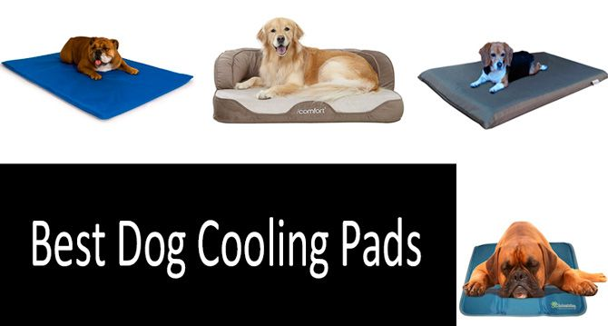 Top 10 Best Dog Cooling Pads 2020
