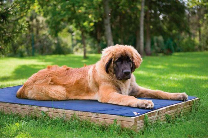 Kühlmatte für hunde: foto