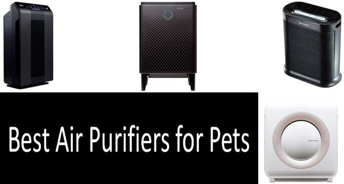 Best air purifiers for pets: photo